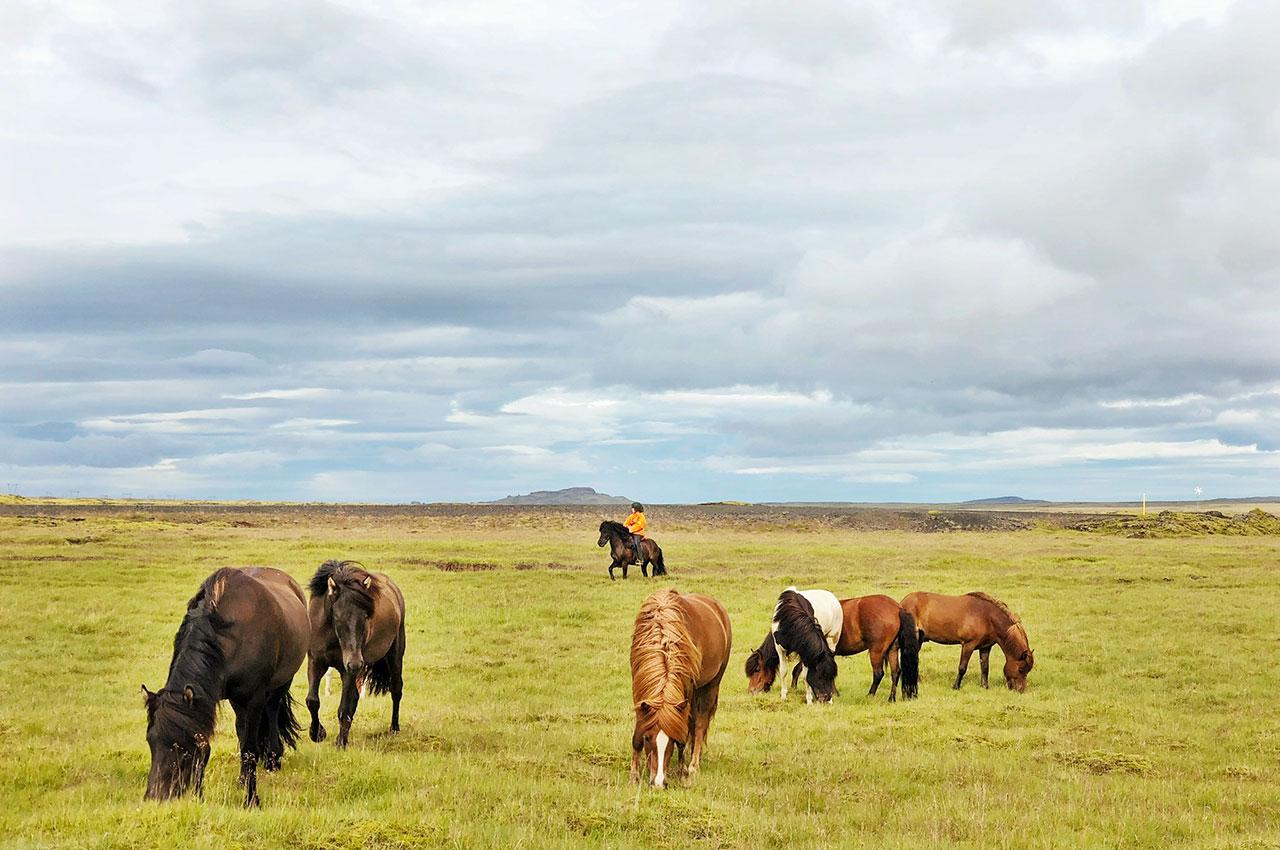islandshästar på Island med ryttare i bakgrund med mäktig vy
