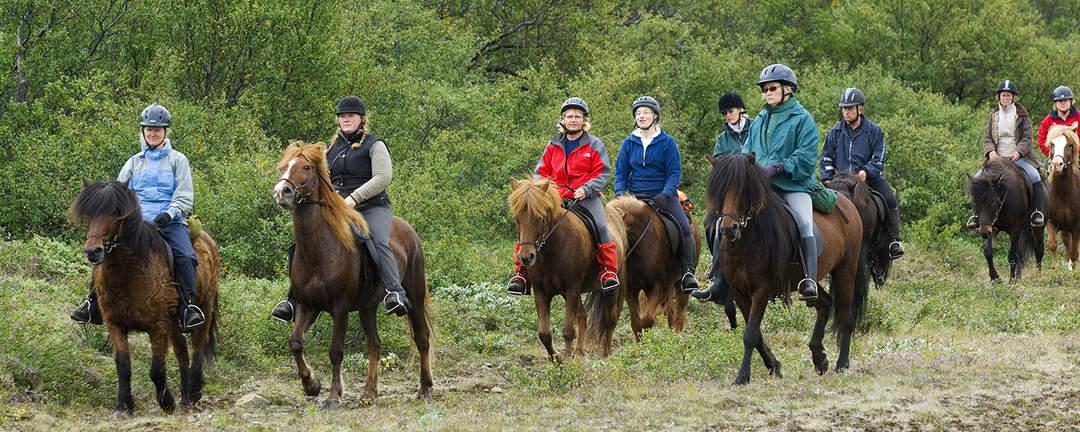 Rider Gyllene Cirkeln genom nationalparken Thingvellir på Island