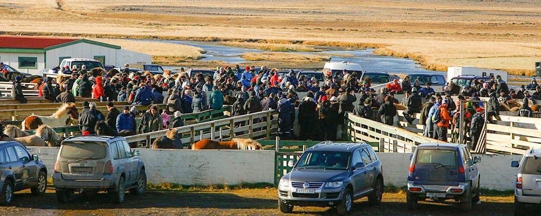 Islänningar och turister som samlat in islandshästar inför vintern